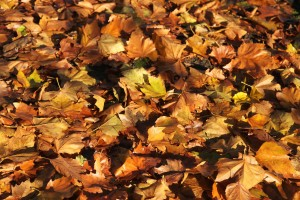 Read the best leaf blower reviews to get rid of these leaves on your lawn.